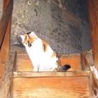 Katze Wendelstein im Turm
