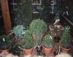 Bild1 1A Garten Ensslin